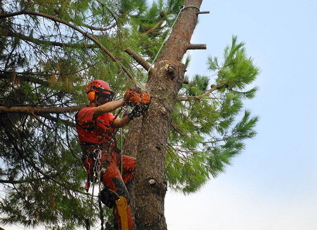 potatura ed abbattimento alberi