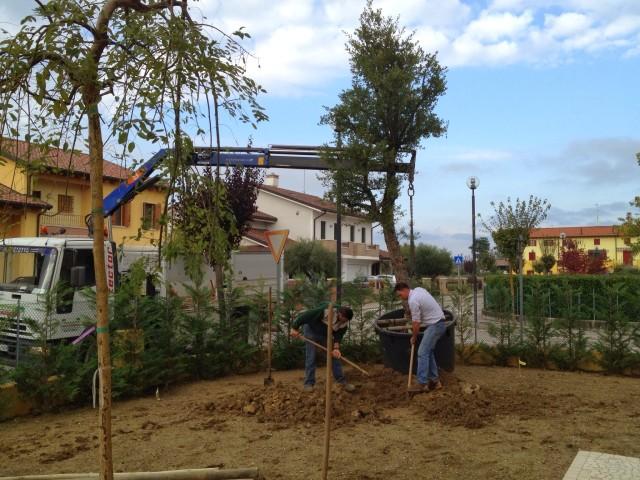 realizzazione giardino a pianiga